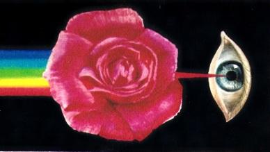 fert rosae