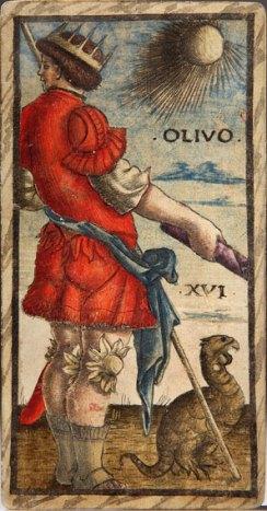 XVI olivo