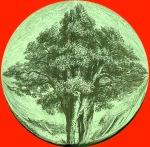 treemundi