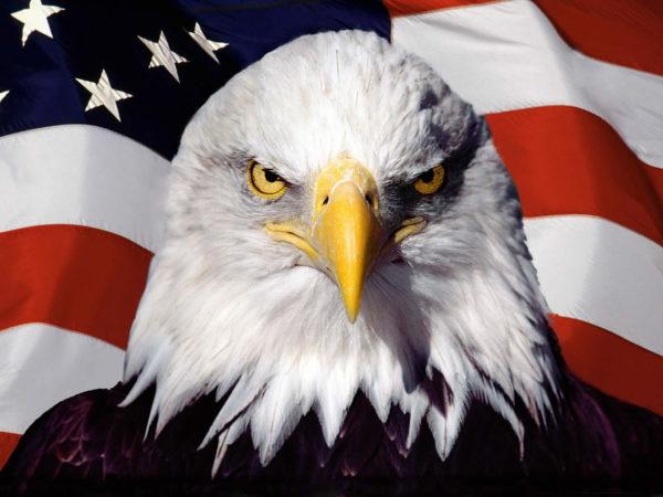 aquila_con_bandiera_americana-600x450