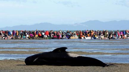 whales-balene-baleine